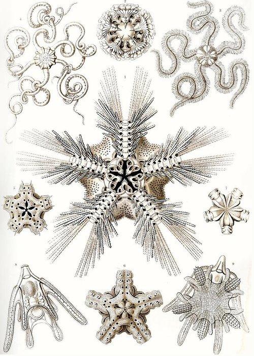 Vertical Greeting Card featuring the painting Kunstformen Der Natur by Ernst Haeckel