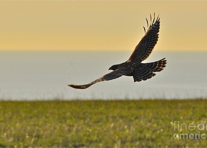 Hawk Greeting Card featuring the photograph Land Sea And Sky by Amy Fearn
