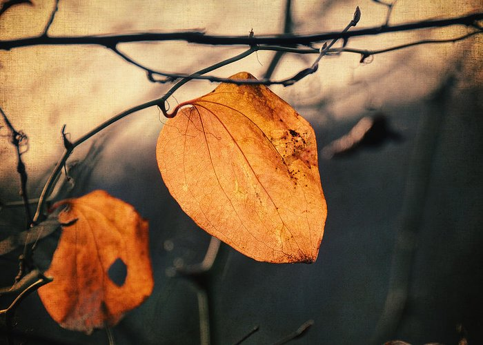 Leaf Greeting Card featuring the photograph Last Leaves by Taylan Soyturk