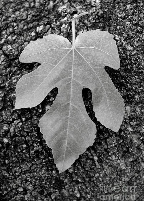 Leaf Greeting Card featuring the photograph Leaf On Bark by Andrew Brooks