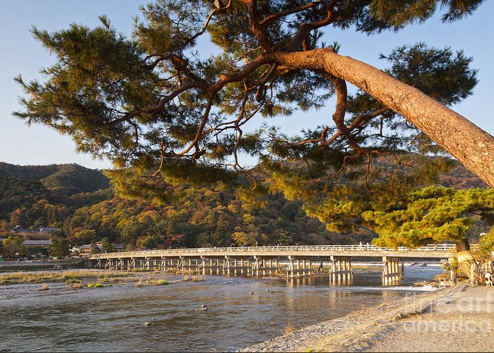 Arashiyama Greeting Card featuring the photograph Leaning Pine Tree Arashiyama Kyoto Japan by Colin and Linda McKie