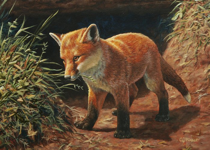 Fox Greeting Card featuring the painting Red Fox Pup - Learning by Crista Forest