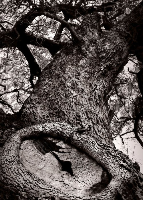 Tree Greeting Card featuring the photograph Lightning Tree by Trish Mistric
