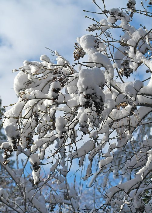 Snow On Branches Greeting Card featuring the photograph Lilac In Winter by Michele Myers
