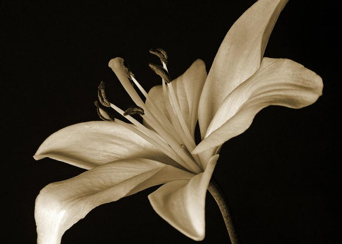 Lily Greeting Card featuring the photograph Lily by Sandy Keeton