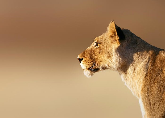 Lion Greeting Card featuring the photograph Lioness Portrait by Johan Swanepoel