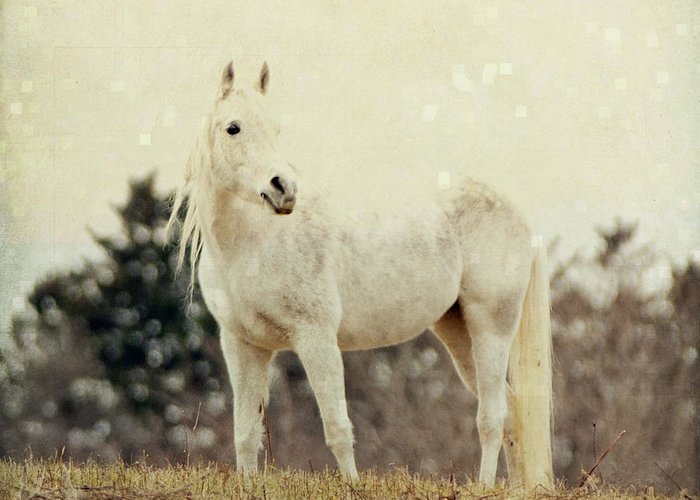 Horse Greeting Card featuring the photograph Lone Horse by Diane Miller