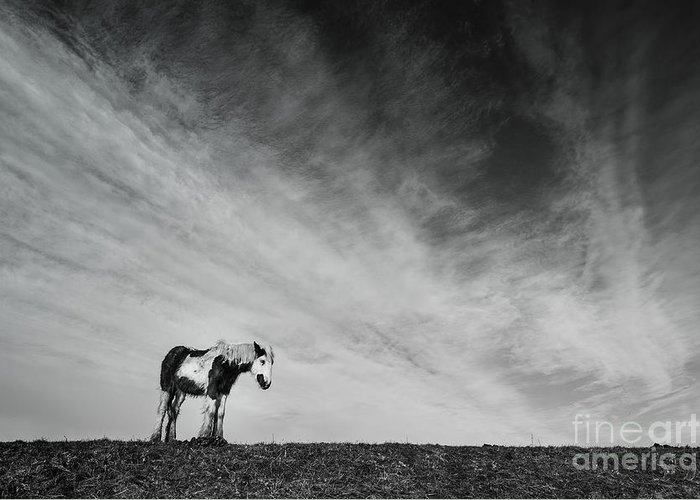 Lone Horse Greeting Card featuring the photograph Lone Horse by Julian Eales