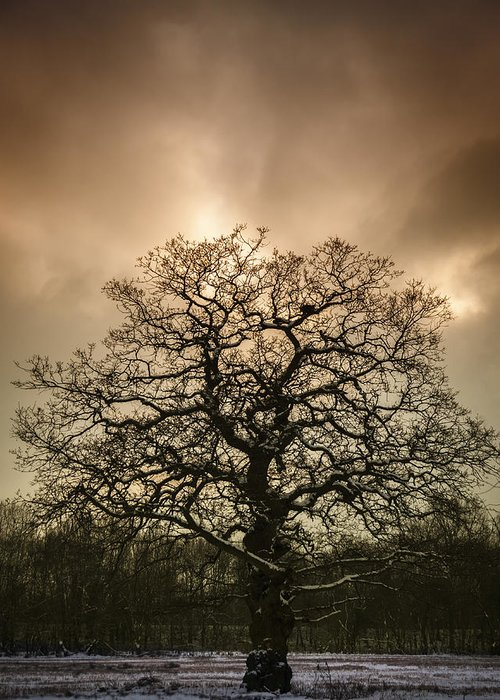 Tree Greeting Card featuring the photograph Lone Tree by Amanda Elwell