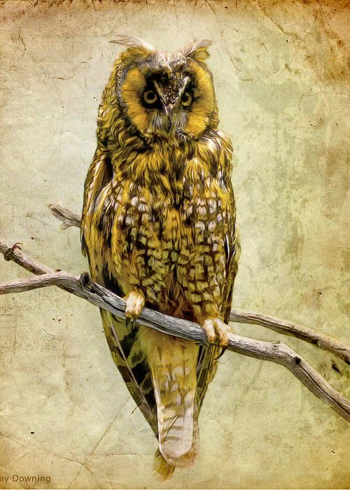 Owl Greeting Card featuring the digital art Long Eared Owl by Ray Downing