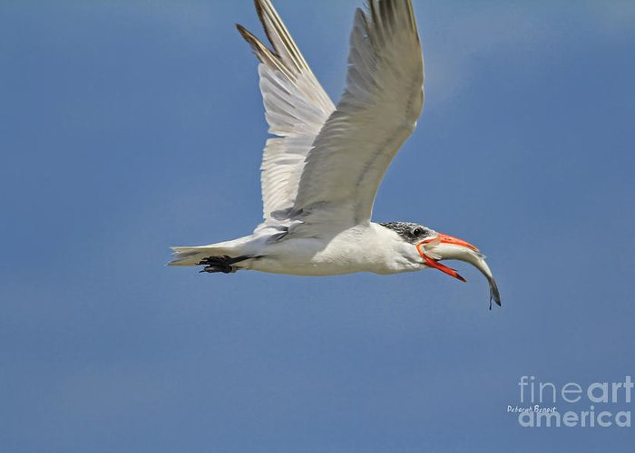 Tern Greeting Card featuring the photograph Look What I Got by Deborah Benoit