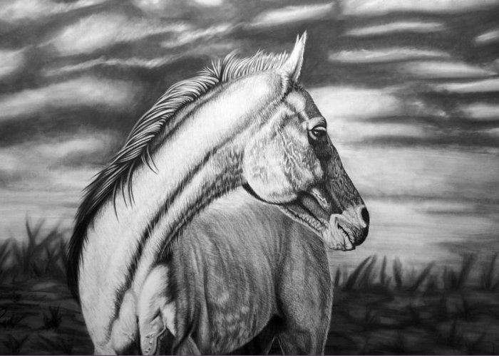 Canvas Greeting Card featuring the drawing Looking Back by Glen Powell