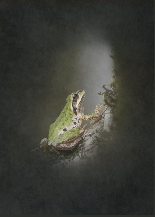 Frog Greeting Card featuring the photograph Looking Up by Angie Vogel