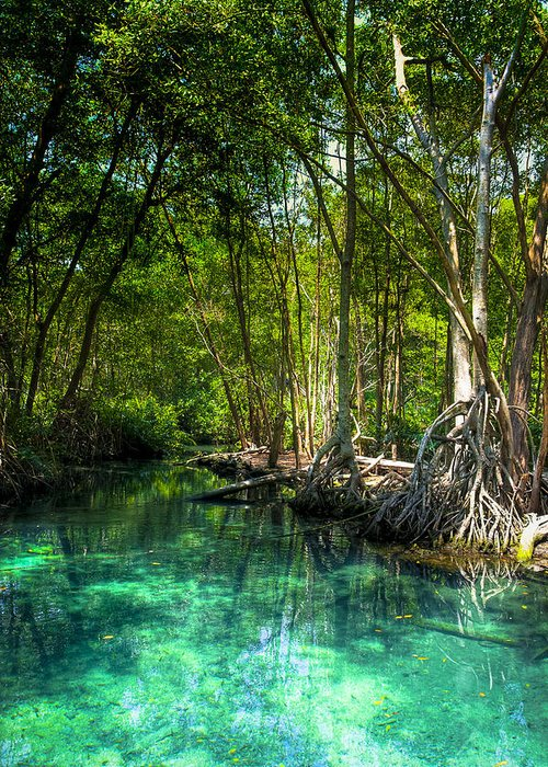 Blue Greeting Card featuring the photograph Lost Lagoon On The Yucatan Coast by Mark E Tisdale