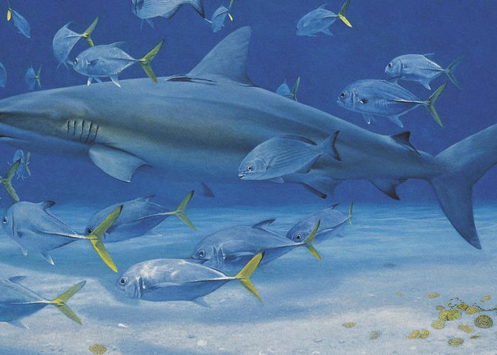 Caribbean Reef Shark Greeting Card featuring the painting Lost Treasures by Randall Scott