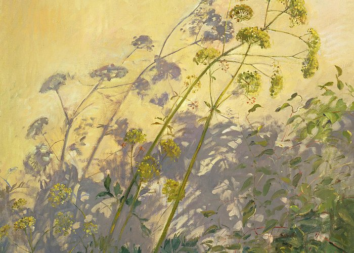 Shadow; Flower; Wild; Plant Greeting Card featuring the painting Lovage Clematis And Shadows by Timothy Easton