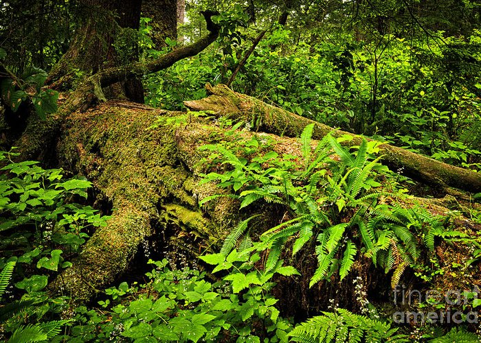 Rainforest Greeting Card featuring the photograph Lush Temperate Rainforest by Elena Elisseeva