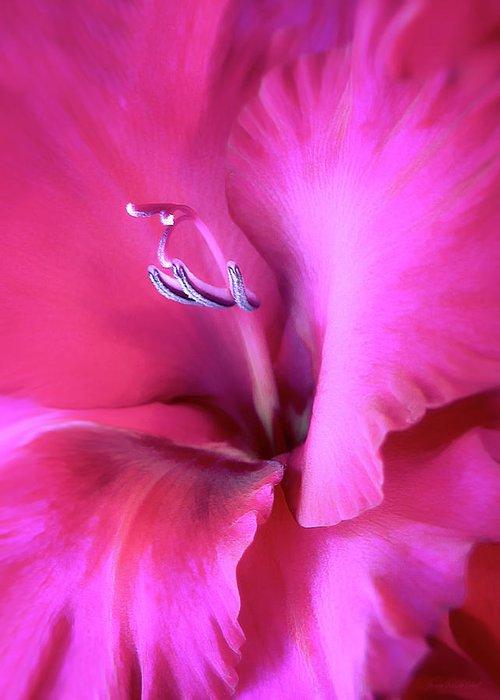 Gladiola Greeting Card featuring the photograph Magenta Splendor Gladiola Flower by Jennie Marie Schell