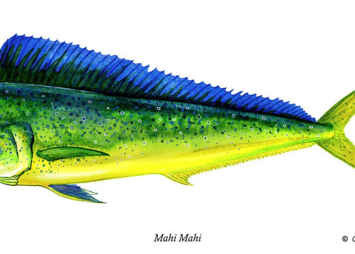 Charles Greeting Card featuring the painting Mahi Mahi by Charles Harden