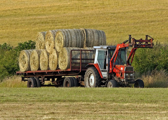 Hay Greeting Card featuring the photograph Make Hay When Sun Shines by Paul Scoullar