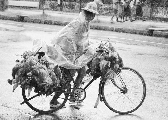Street Greeting Card featuring the photograph Man Riding Bicycle Carrying Chickens by Stuart Corlett