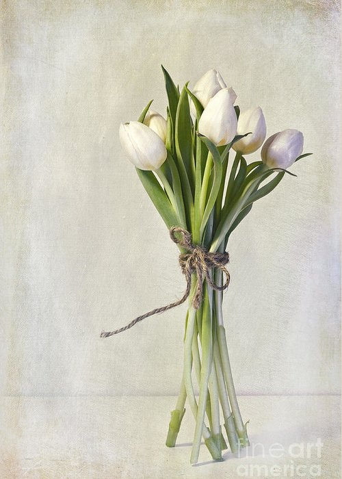 Cream Greeting Card featuring the photograph Mazzo by Priska Wettstein