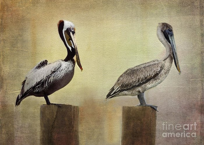 Brown Pelican Greeting Card featuring the photograph Me And My Missus by Betty LaRue