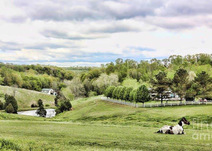 Tennessee Greeting Card featuring the photograph Meadow II by Chuck Kuhn