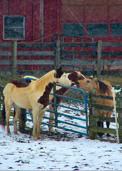 Horses Greeting Card featuring the photograph Meeting Of The Equine Minds by Julie Dant