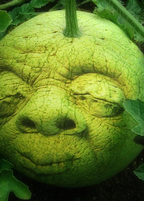 Melon Greeting Card featuring the photograph Melon Head by Jack Zulli