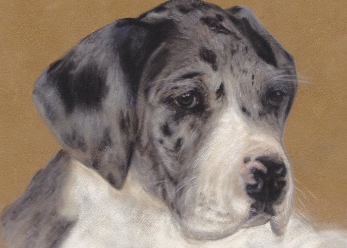 Merle Puppy Greeting Card featuring the pastel Merle Great Dane Puppy by Loreen Pantaleone