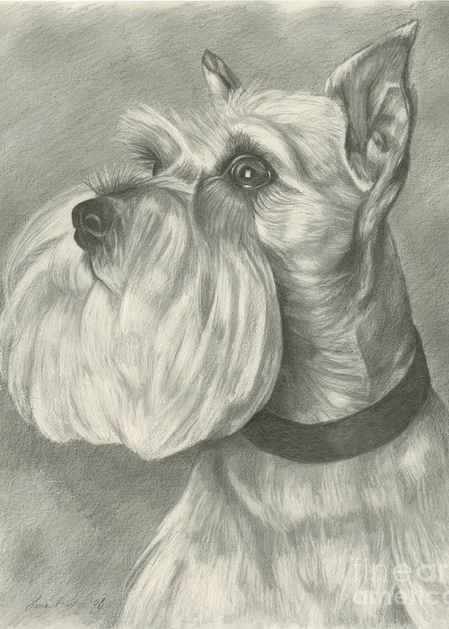 Mini Greeting Card featuring the drawing Miniature Schnauzer by Lena Auxier
