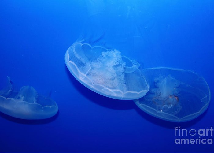 Jelly Greeting Card featuring the photograph Moon Jelly Fish 5d24936 by Wingsdomain Art and Photography