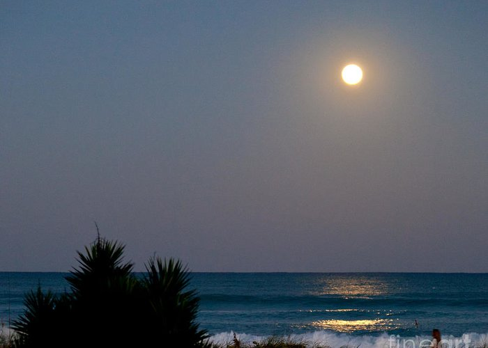 Moonlit Stroll Greeting Card featuring the photograph Moonlit Stroll by Michelle Wiarda