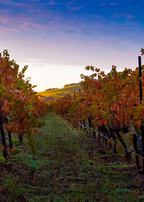 Nature Greeting Card featuring the photograph Morning At The Vineyard by Bill Gallagher