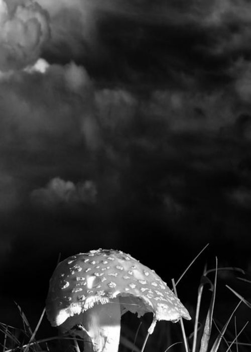 Mushrooms Greeting Card featuring the photograph Mushroom by Bob Orsillo