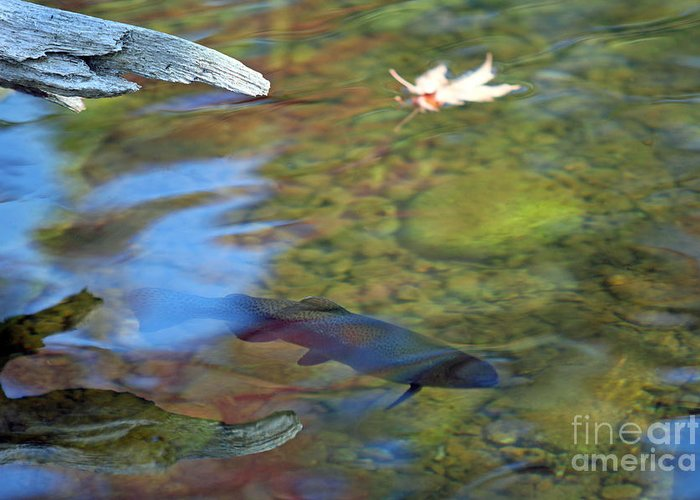 Rainbow Greeting Card featuring the photograph Mystic Waters by James Lady