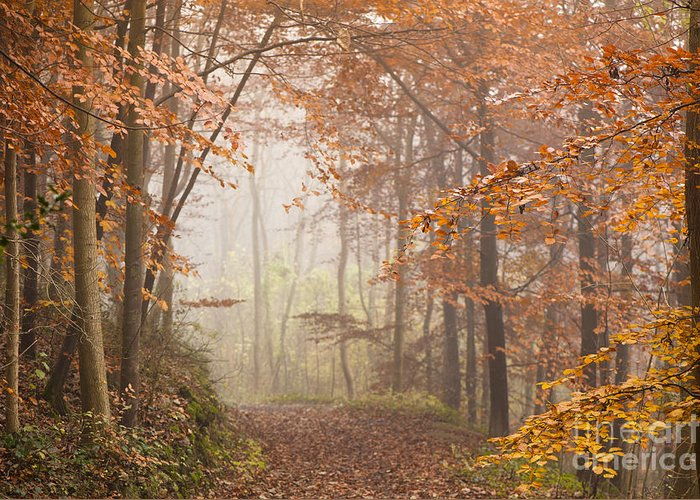 Atmospheric Greeting Card featuring the photograph Mystic Woods by Anne Gilbert
