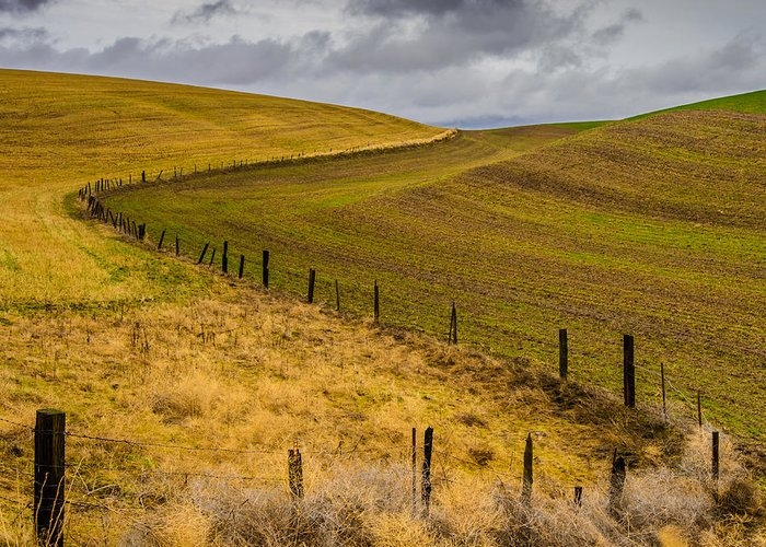The Palouse Greeting Card featuring the photograph Neighbors by Dan Mihai
