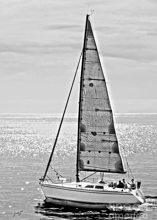 Sailboat Greeting Card featuring the photograph New Dawn - Sailing Into Calm Waters by Artist and Photographer Laura Wrede