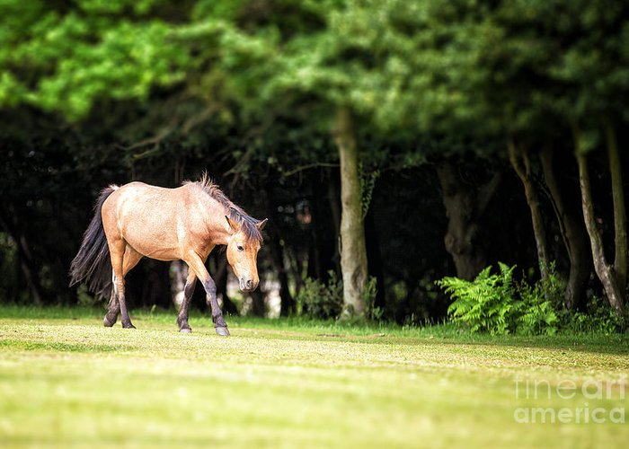 Forest Greeting Card featuring the photograph New Forest Pony by Jane Rix