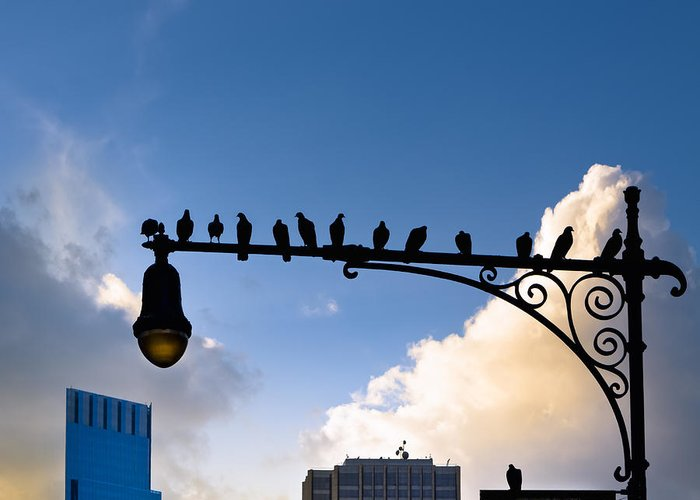 New York Greeting Card featuring the photograph New York City Is For The Birds by Mark E Tisdale