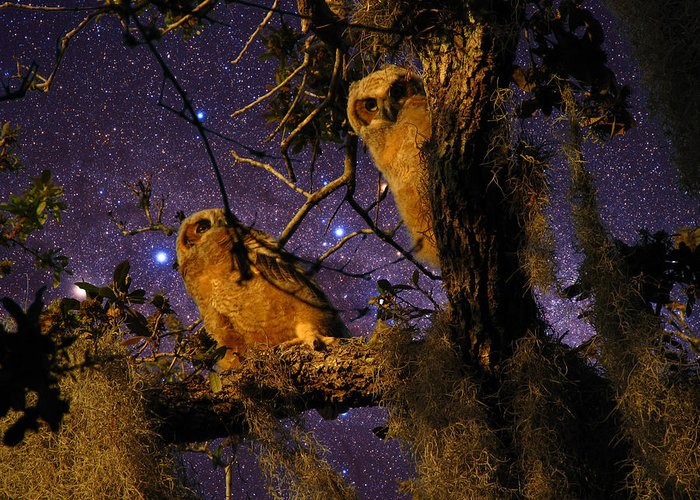 Phil Greeting Card featuring the photograph Night Owls by Phil Penne