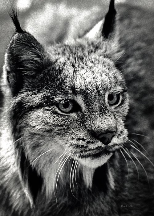 Animal Greeting Card featuring the photograph North American Lynx In The Wild. by Bob Orsillo