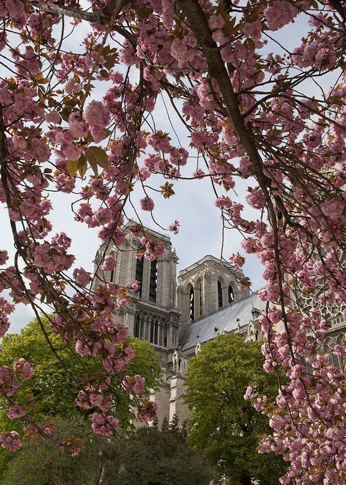 Paris Greeting Card featuring the photograph Notre Dame 1 by Art Ferrier