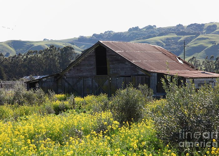 Sonoma Greeting Card featuring the photograph Old Barn In Sonoma California 5d22232 by Wingsdomain Art and Photography