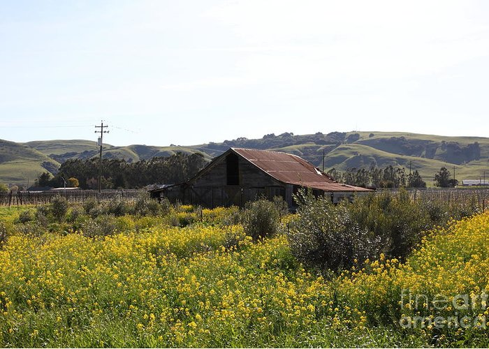 Sonoma Greeting Card featuring the photograph Old Barn In Sonoma California 5d22234 by Wingsdomain Art and Photography