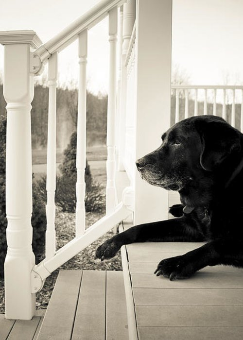 Dog Greeting Card featuring the photograph Old Dog On A Front Porch by Diane Diederich