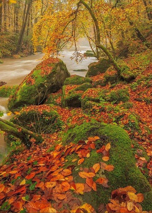 Autumn Greeting Card featuring the photograph On The Riverside by Maciej Markiewicz