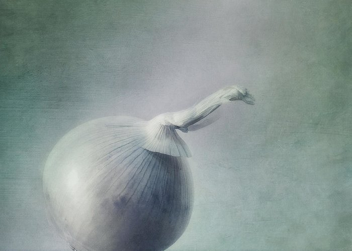 Zwiebel Greeting Card featuring the photograph Onion by Priska Wettstein